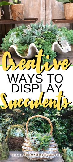 Urban Garden Design Creative Ways to Display Succulents will add fun to your garden. Whether you display them indoors, these DIY planters are the perfect way to give your space creative touches. Gardening For Beginners, Gardening Tips, Organic Gardening, Kitchen Gardening, Vegetable Gardening, Planting Succulents, Succulent Plants, Succulent Care, Succulents Diy