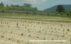 Lot demonstrativ de arbusti fructiferi in Ferma Barzani - Ruben Budau Vineyard, Berries, Outdoor, Farm Gate, Plant, Outdoors, Vine Yard, Bury, Vineyard Vines