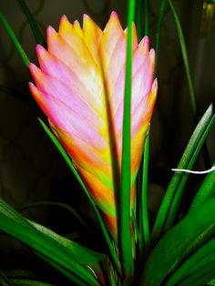 Plants and their names on Pinterest | Tropical Flowers ...