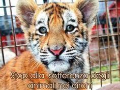 Un NO forte e chiaro da Napoli al circo con animali