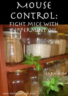 Here's an idea on how to get peppermint oil into mousy areas like your pantry or other places in your house: Put a couple of drops of peppermint oil on cotton balls or pieces of sponge and place them throughout your pantry. They absorb the oil and act as little mouse repellers. You can also add 10 drops of oil to some water in a spritzer bottle and spray the area. For best mouse elimination results, you want an oil that has not been diluted. doTERRA's Peppermint Oil is 100% pure and…