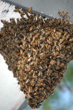 Honey bee hives consist of 20,000 - 30,000 bees in the winter, and over 60,000 - 80,000 bees in the summer.
