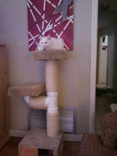 cat perch with posts make from large pvc pipes and connectors.