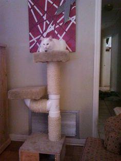 The cat perch I made