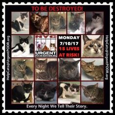 TO BE DESTROYED 7/10/17