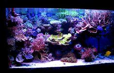 Amir Spivak's (damura) Reef Aquarium
