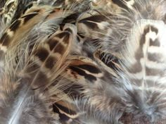 100 Plus Mixed hen pheasant feathers millinery fly tying craft | eBay