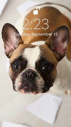 Lovely wallpaper for your iPhone 11 Pro from Everpix Live⭐️ wallpaper videos French Bulldog🐕 Cool Live Wallpapers, Motion Wallpapers, New Live Wallpaper, Wallpaper S, Wallpaper Backgrounds, Christmas Aesthetic Wallpaper, Black Aesthetic Wallpaper, Aesthetic Wallpapers, Aesthetic Gif