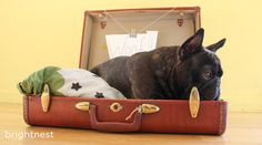 No-Sew Dog Bed from an Upcycled Suitcase!