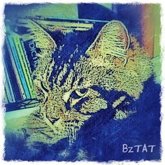 Another version of previously posted pic of Who. Get a digital portrait of your pet at: www.bztatstudios.com. #Who #custompetportrait #digital #digitalart #iphonegraphy #catart #catphotography #cats #catsofinstagram #bztatart