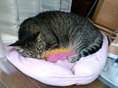 Today's cat on 11th July 2012 by ganchan2, via Flickr