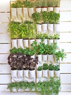 Urban Garden Design Create a space-saving vertical herb garden with these brilliant DIY ideas. - Create a space-saving vertical herb garden with these brilliant DIY ideas. Vertical Herb Gardens, Vertical Garden Design, Herb Garden Design, Diy Herb Garden, Herb Gardening, Organic Gardening, Vertical Planter, Indoor Gardening, Garden Pallet