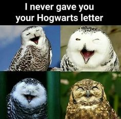 That's not funny bro. I've waited for that letter. 11 years for it... in Azkaban!