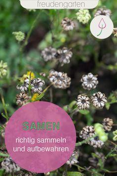 statt kaufen. Im Sommer Samen für das nächste Gartenjahr ernten und richtig aufbewahren. Wir verraten, wie es richtig geht. #Gartenidee #freudengarten