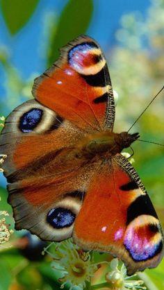 """Beautiful butterfly / """"Descobrir novas possibilidades é renascer.""""  (João Alberto Catalão)"""
