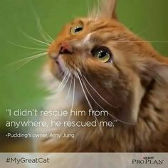 Rescue kitty cat