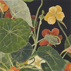 Unique woodblock print by Cressida Campbell Botanical Art, Botanical Illustration, Illustration Art, Contemporary Australian Artists, Collages, Art Forms, New Art, Fiber Art, Watercolor Art