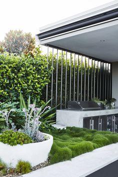 No-Mow Grass — Adam Robinson Design No Mow Grass, No Grass Yard, Landscape Design, Garden Design, Balcony Design, Zoysia Grass, Modern Outdoor Living, Ground Cover Plants, Low Maintenance Garden