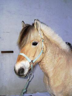 nik2 Horses, Animals, Animales, Animaux, Animal, Animais, Horse