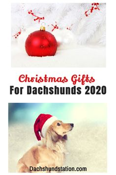 10 Best Holiday Gifts For Dachshunds 2020 included! Dachshund parents, your doxie works super hard all year long to make you feel comforted and loved, they deserve the best gifts this holiday season.  I found the absolute best dog toy that makes it easy to keep my doxies happy, busy, and rewarded with yummy dog treats. Dachshund bed, Best Dachshund dog toys.  #dachshund  #doxie