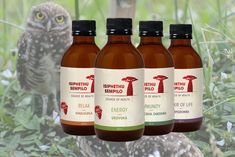 Source of Health offers a number of products, under the Isiphethu Sempilo brand, that help to promote focus, concentration and mental performance. Find out more. #traditionalafricanmedicine #africanherbalremedies #africantraditionalmedicine #herbalmedicine #africanherbs #africanhealth #plantmedicine #traditionalmedicine #tinctures #herbalism #indigenousherbalism #healthyherbs #herbalist #sourceofhealth African Herbs, Healthy Herbs, Medicinal Plants, Herbal Medicine, Herbal Remedies, Hot Sauce Bottles, Herbalism, Number, Drinks