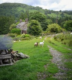 """mydododied: """" Country cottage """""""