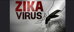 Zika Virus – 4 Things Mainstream Media Isn't Telling You | Homesteading News And Preparedness Tips by Pioneer Settler at http://pioneersettler.com/zika-virus-news-2/