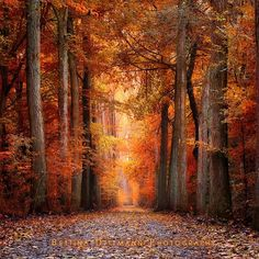 """""""Red Forest"""""""