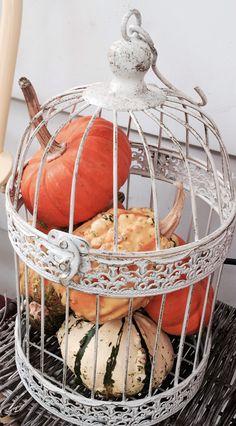 Gourds in a bird cage, bird cage decor