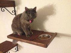 Se você também cria cães em casa, coloque a tigela de comida do gato suspensa para que os cachorros não se aproximem