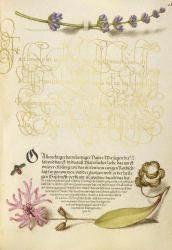 Horis Hoefnagel- Mira calligraphiae monumenta