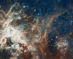 Star formation in the tarantula nebula