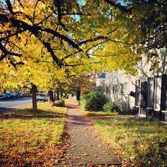 Fall Color in Corvallis, Oregon.