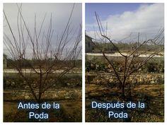 La poda del ciruelo | Plantas Youtube, Plants, Gardens, Molde, Sustainable Farming, Planters, Plant, Planting