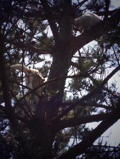 この日は初めて猫の木登りを見ました。遊んでるみたいでした。