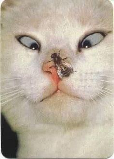 kısırlaştırılmış erkek kedi - Google'da Ara