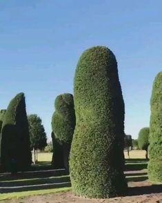 Green Life, Cactus Plants, Artist, Design, Cacti, Artists, Cactus