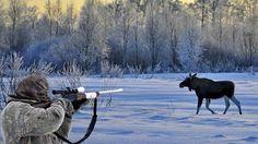 Alaska Moose Hunting, monster bull !!!