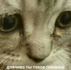 Russian Cat, Russian Memes, Cute Love Memes, Funny Cute, Stupid Pictures, Funny Pictures, Koala Meme, Hello Memes, Happy Memes
