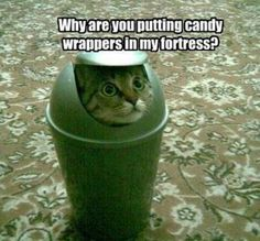 Why are you putting candy wrappers in my fortress