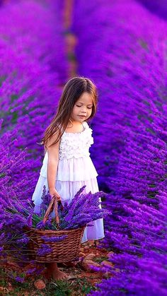 Lavender Fields, Lavender Flowers, Purple Flowers, Lavander, Beautiful Flowers Wallpapers, Beautiful Roses, Pretty Flowers, Lavender Aesthetic, Sunflower Wallpaper
