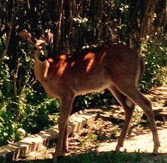 Visitor in back yard in Gore Bay Manitoulin Island, Ontario, Beautiful Places, Backyard, Canada, Patio, Backyards