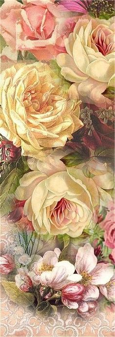 (Original as Re-Pinned)  Cabbage Roses