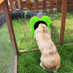 Our Customers | Runaround: Rabbit and Guinea Pig Runs