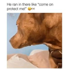 """The face in the pillow and he's like """"whew that was close""""😅 Funny Animal Jokes, Funny Dog Memes, Funny Dog Videos, Funny Animal Pictures, Animal Memes, Cute Funny Dogs, Cute Funny Animals, Cute Stories, Cute Animal Videos"""