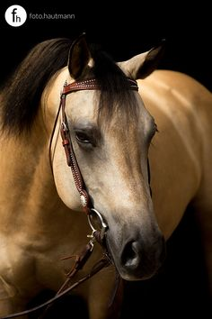 Ememly Pachee :: APHA Mare