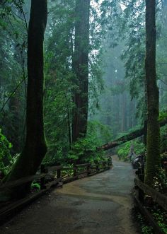 Muir Woods, San Francisco