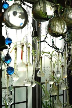 Apothecary Hanging Bottles Holding Plants. Window Display, with fairy lights and large wired hanging beads.