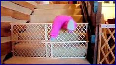 Mission Impossible: Babies Escape : Video Clips From The Coolest One--These babies are adorable and quite the little escape artists.  Enjoy and remember.  ♥♥♥