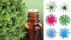 Best antibiotics available in your kitchen #health